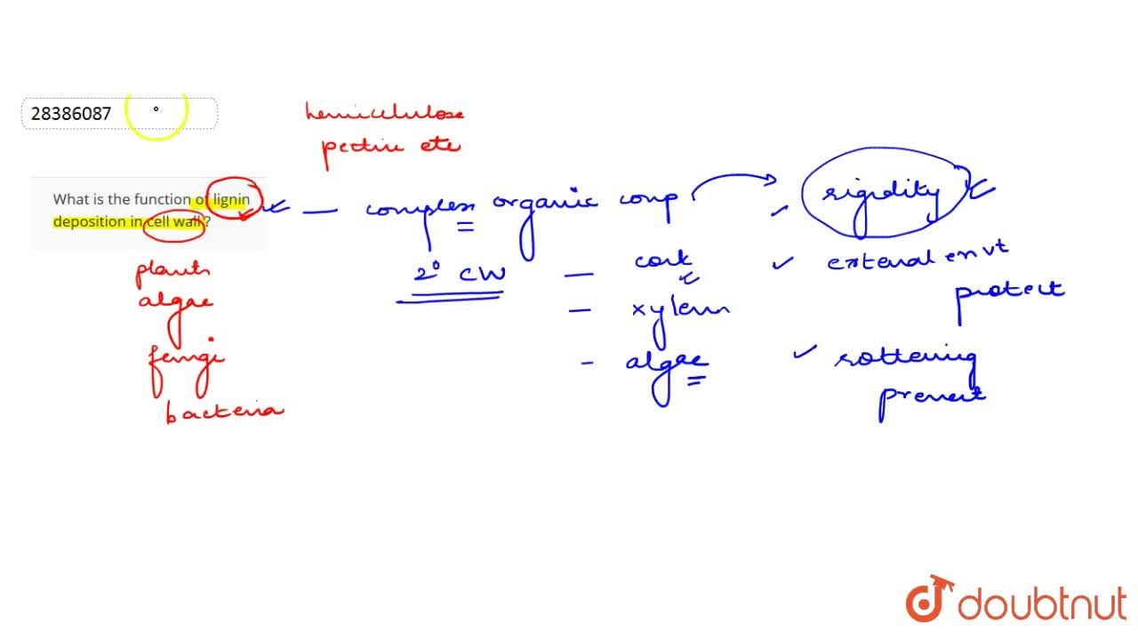 Solution for What is the function of lignin deposition in cell