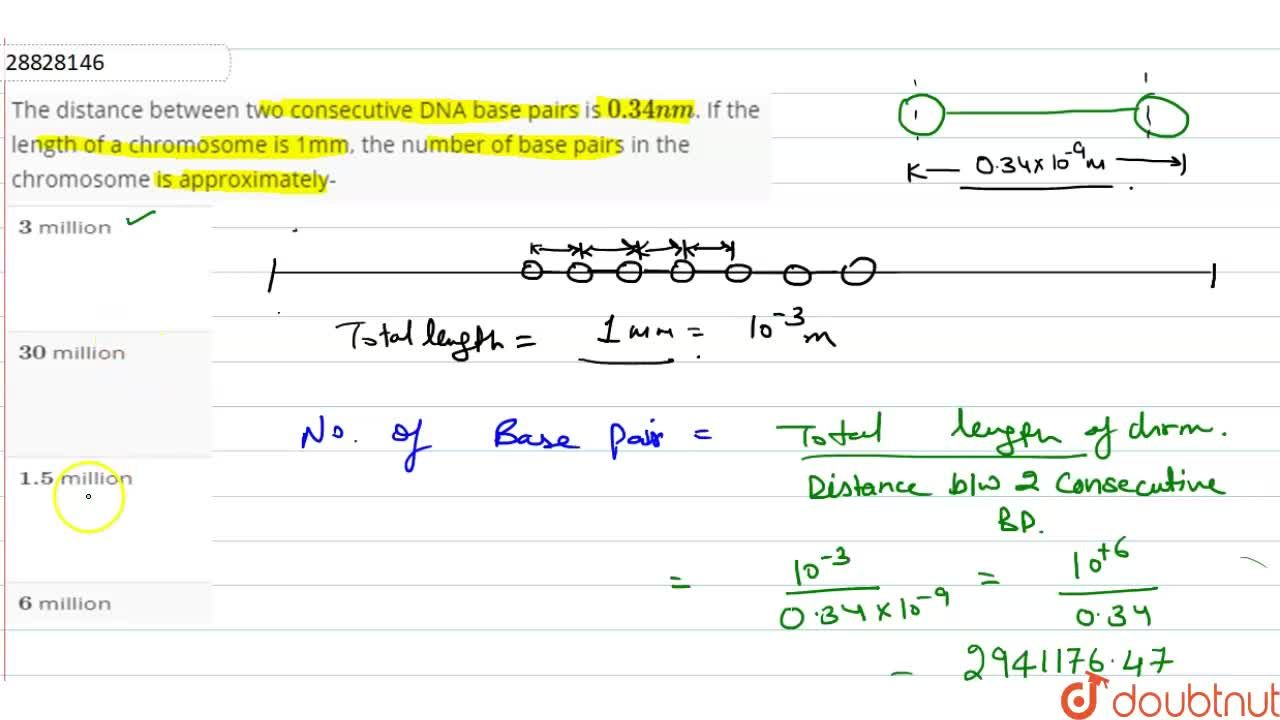 Solution for The distance between    two consecutive  DNA  base