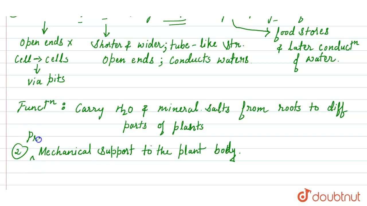 Solution for Give an account of structure and function of xylem