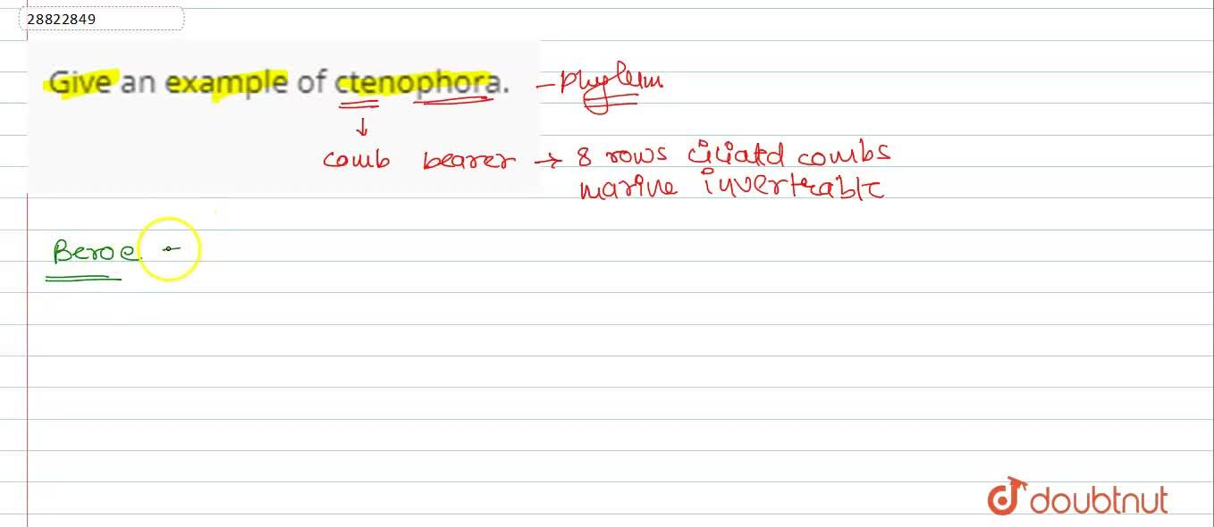 Solution for Give an example of ctenophora.