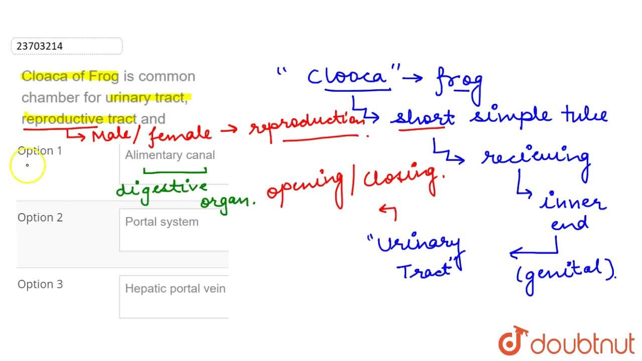 Solution for Cloaca of Frog is common chamber for urinary tract