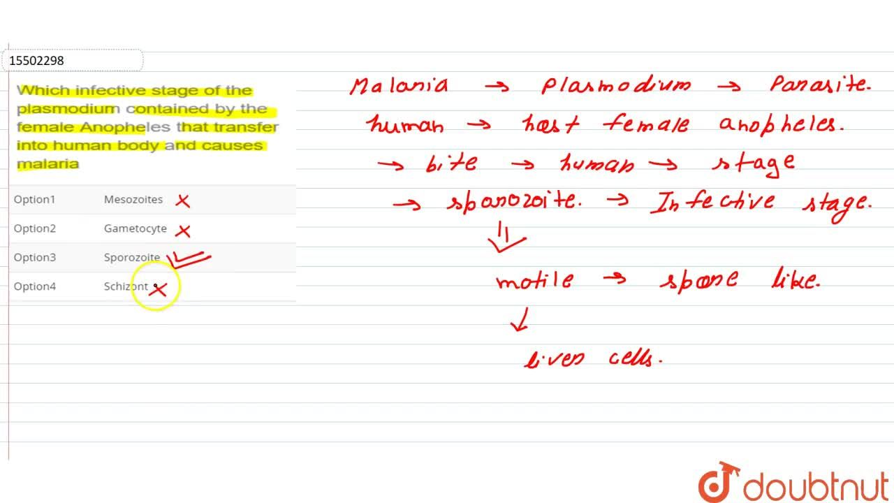 Solution for Which infective stage of the plasmodium contained