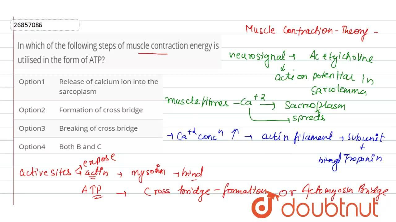 Solution for In which of the following steps of muscle contract