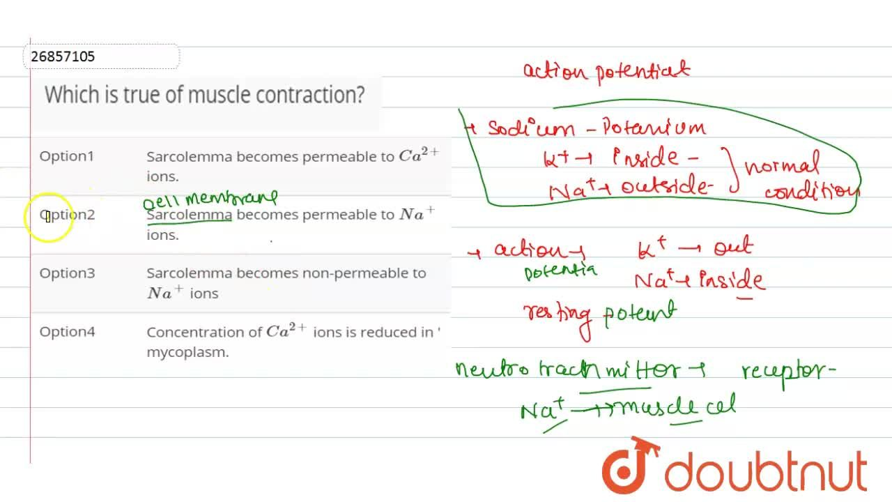 Solution for Which is true of muscle contraction?