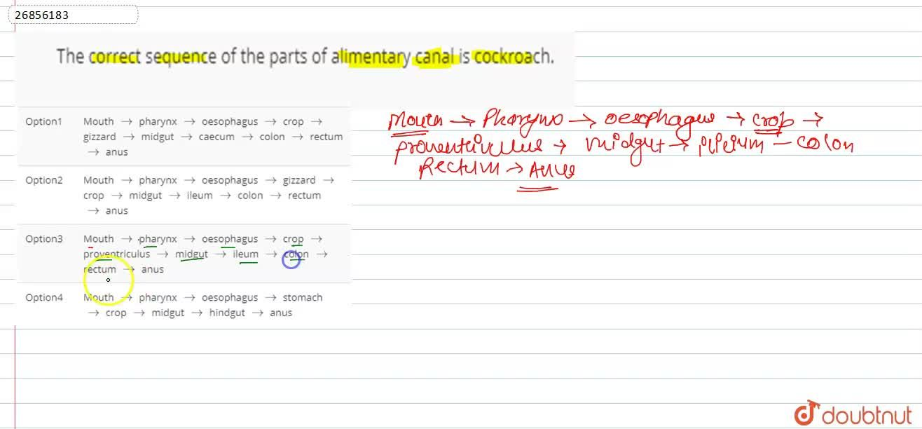 Solution for The correct sequence of the parts of alimentary ca