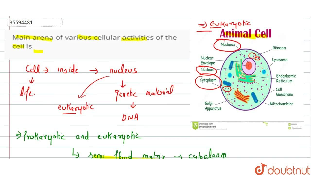 Solution for Main arena of various cellular activities of the c