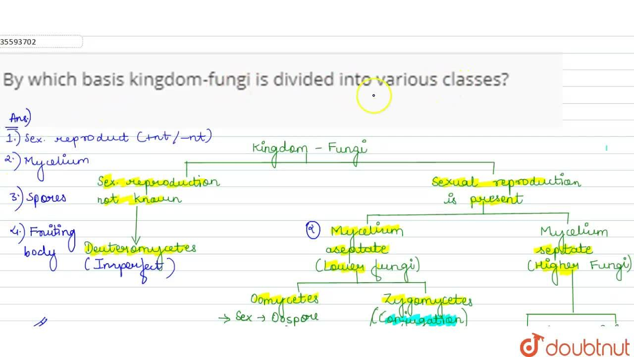 Solution for By which basis kingdom-fungi is divided into vario