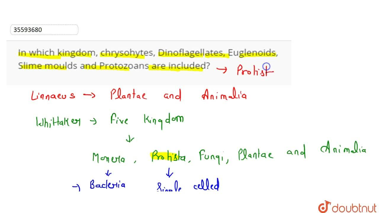 Solution for In which kingdom, chrysohytes, Dinoflagellates, Eu