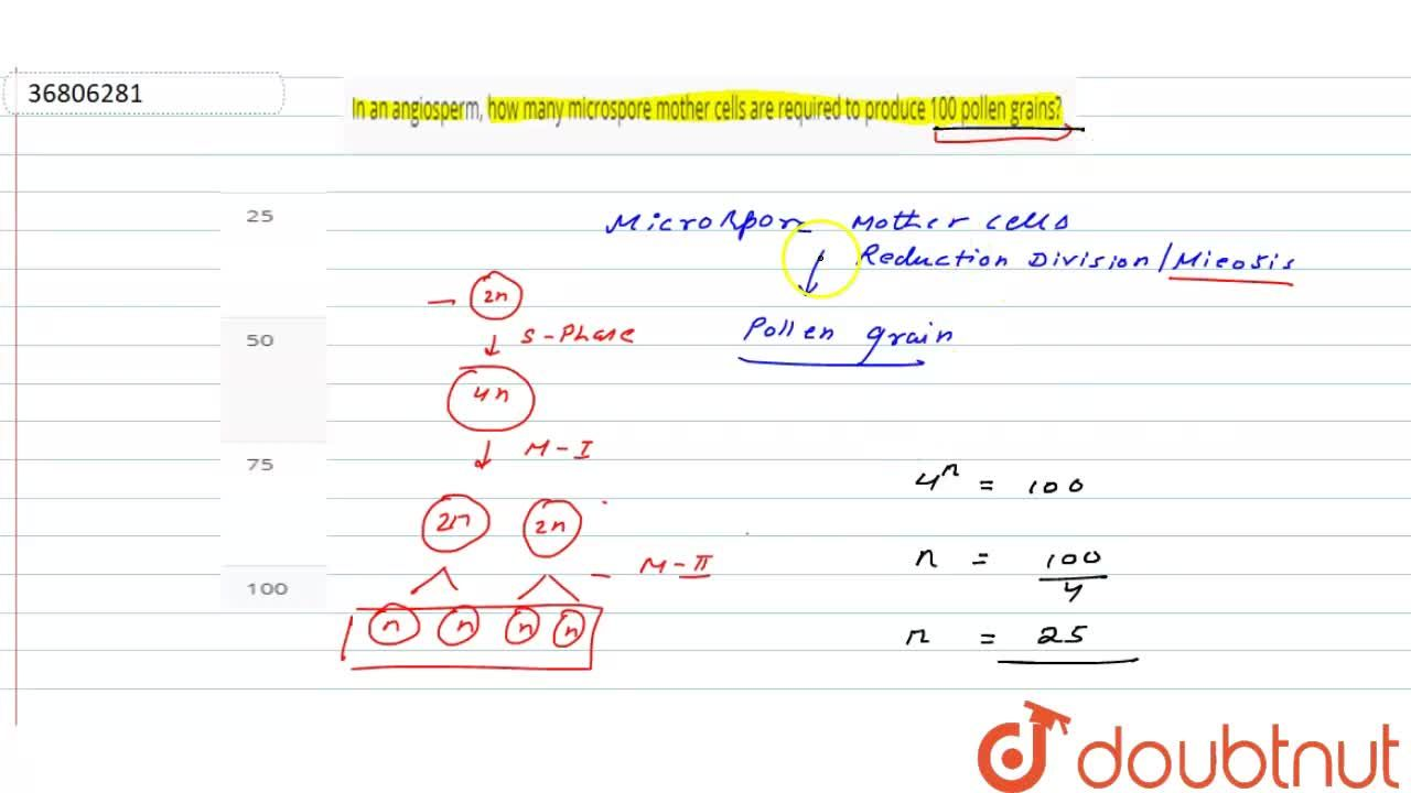 Solution for In an angiosperm, how many microspore mother cells
