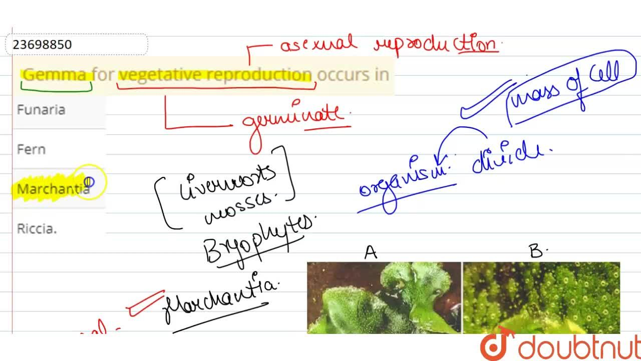 Solution for Gemma for vegetative reproduction occurs in