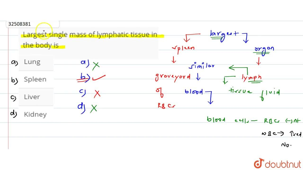 Largest single mass of lymphatic tissue in the body is