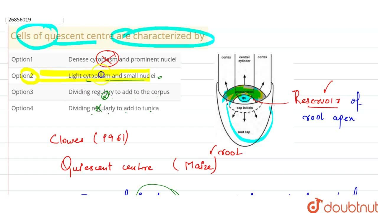Solution for Cells of quescent centre are characterized by