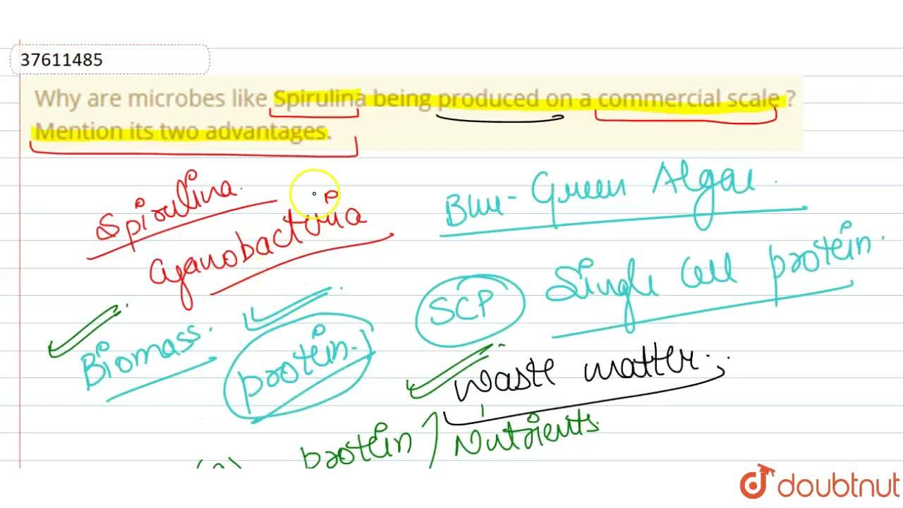 Solution for Why are microbes like Spirulina being produced on