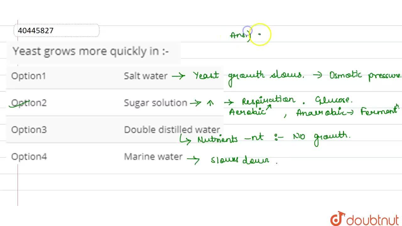 Solution for Yeast grows more quickly in :-