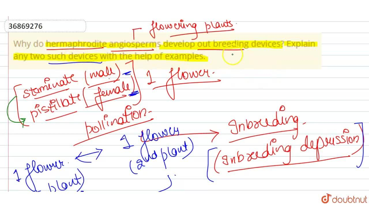 Solution for Why do hermaphrodite angiosperms develop out breed