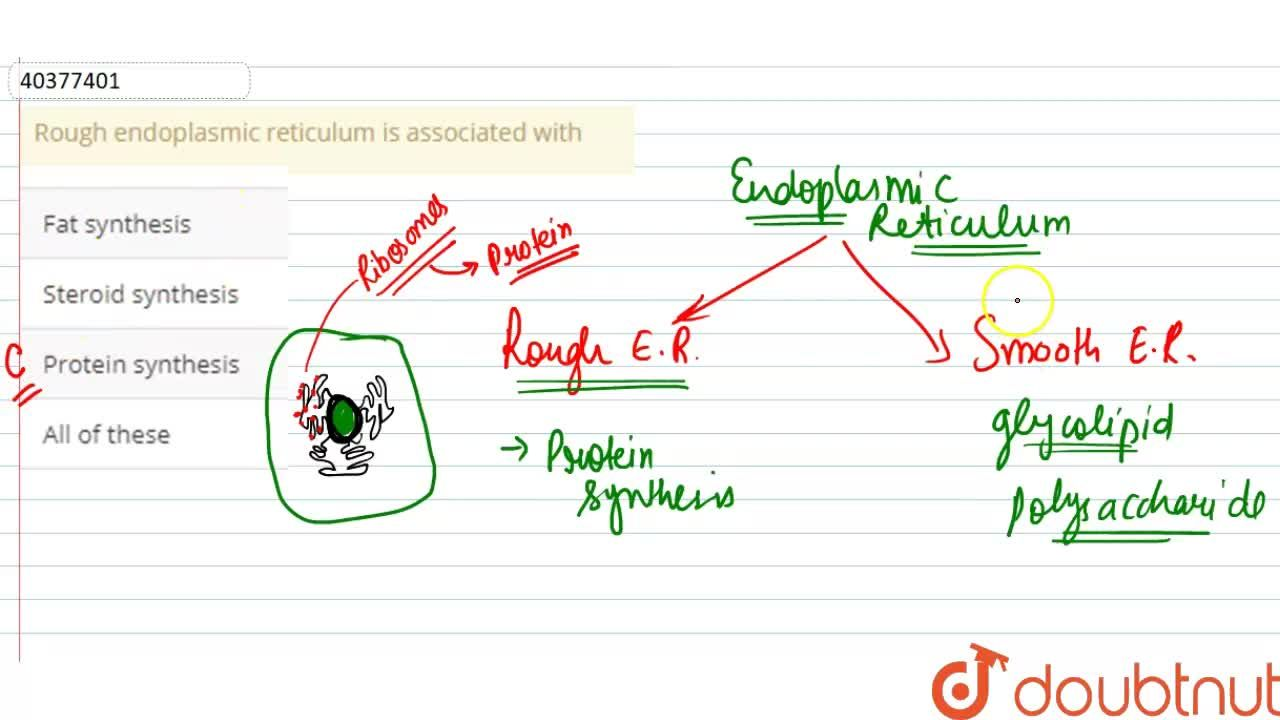 Solution for Rough endoplasmic reticulum is associated with