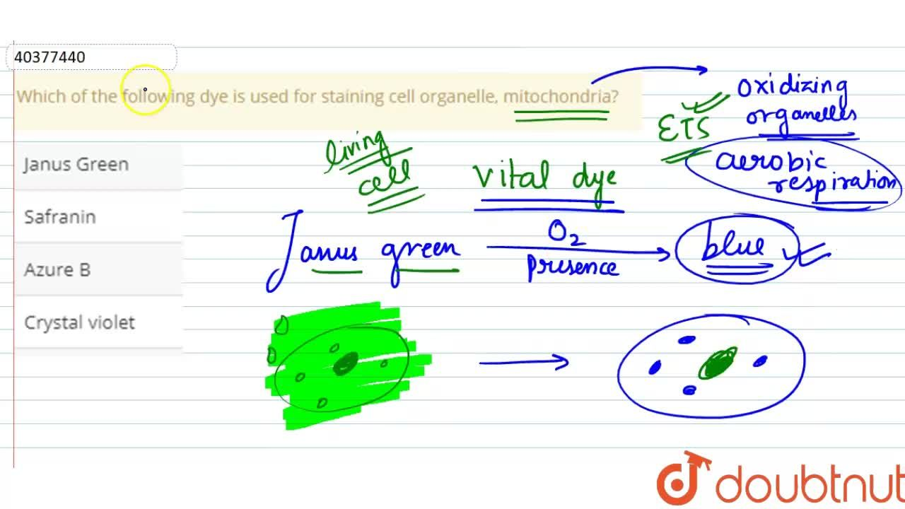 Solution for Which of the following dye is used for staining ce