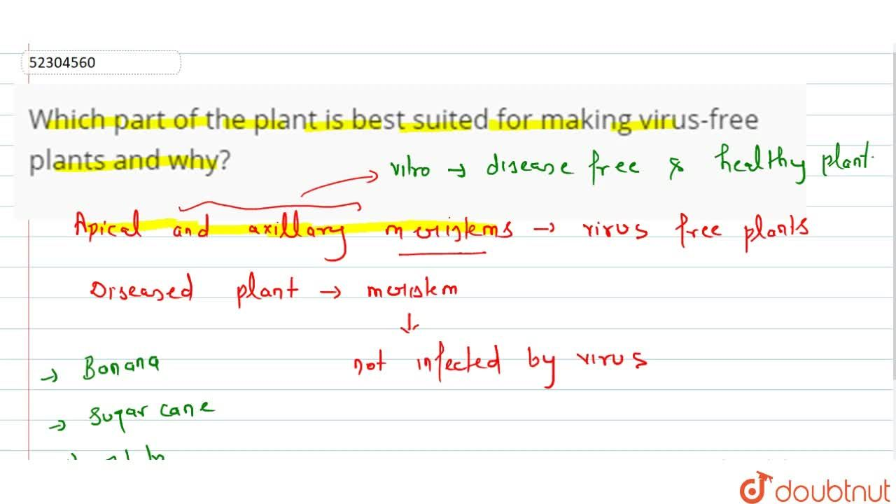 Solution for Which part of the plant is best suited for making