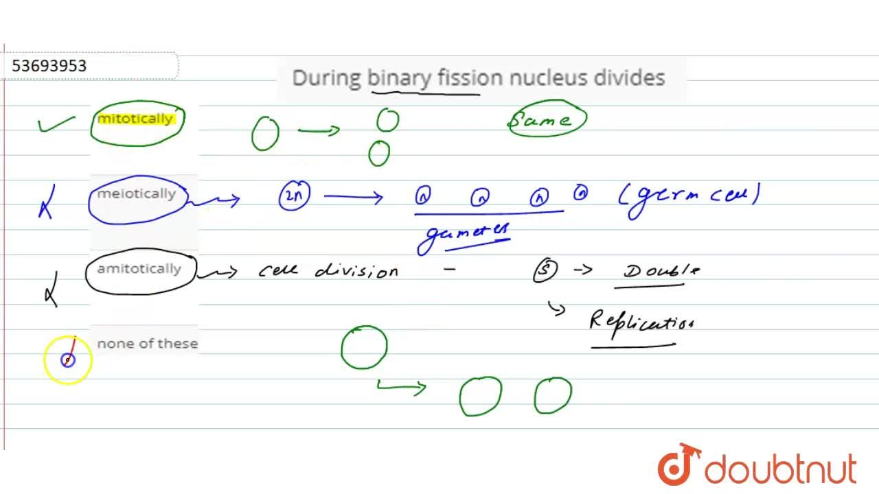 Solution for During binary fission nucleus divides