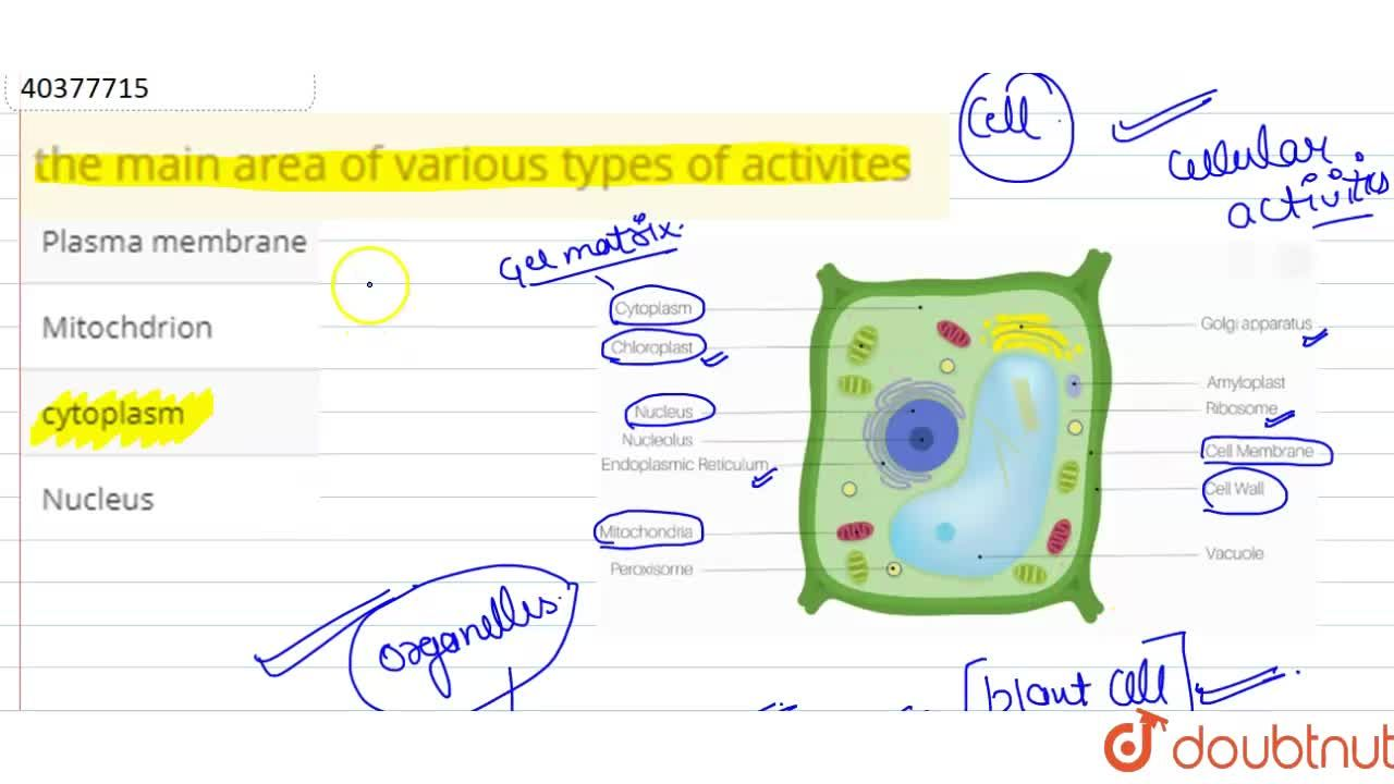 Solution for the main  area  of various  types  of  activites