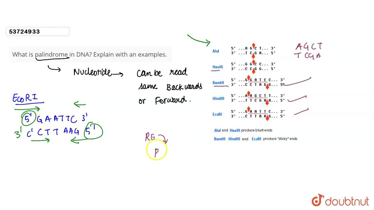 Solution for What is palindrome in DNA? Explain with an example